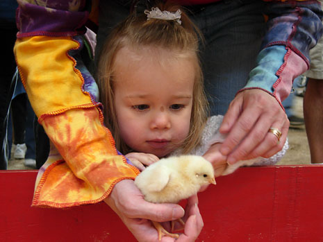 farm-chick-adoration.jpg