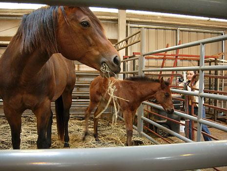 farm-horses.jpg