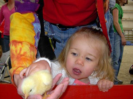 farm-pet-chick.jpg