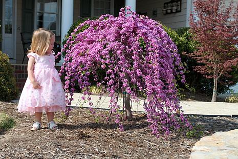 7pre-birthday-hi-flowers.jpg