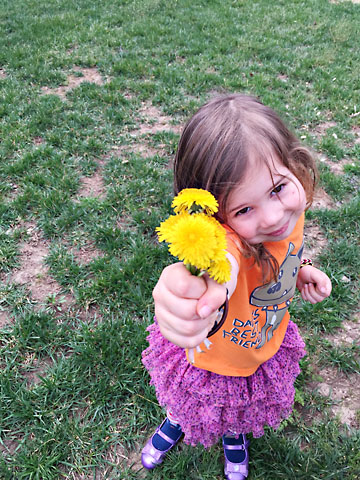 spring flower m picked